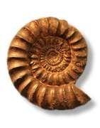 Véritables fossiles