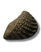 Moulages paléontologiques de qualité muséologique